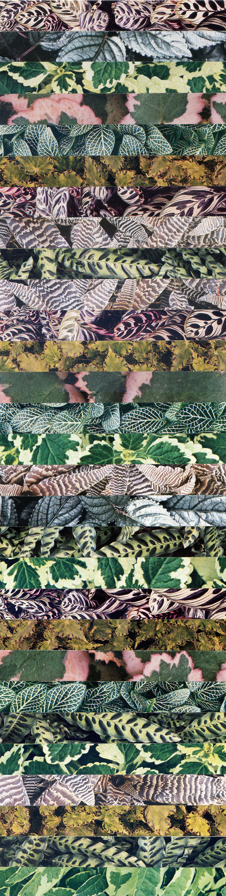 s1_luis_dourado_the_garden_fifthregression_yatzer